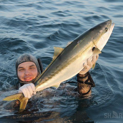 Подводная охота на лакедру